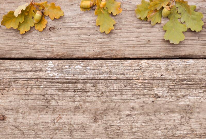 Eicheln mit Blättern auf hölzernem Hintergrund im Herbst flatley stockbilder