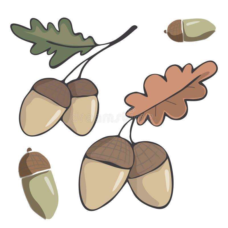 Eichelzahl hölzerne Frucht des Clipartillustrationsblattzeichnungs-Farbelement-Vektors Waldroter Orange eine des Eichengrüns zwei lizenzfreie abbildung