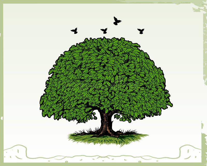 Eichen-Baum stock abbildung