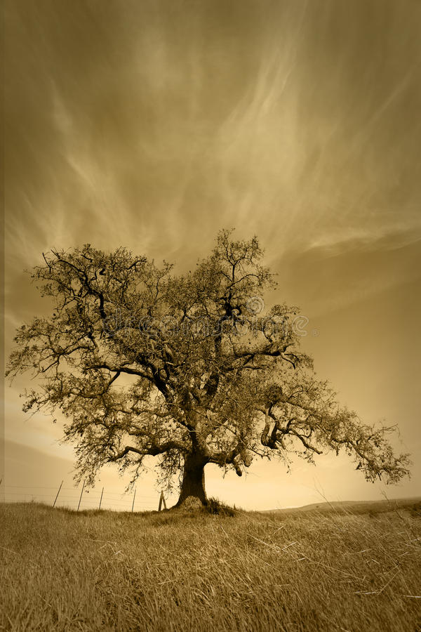 Eichen-Baum unter angemessenes Wetter-Himmel stockfotos