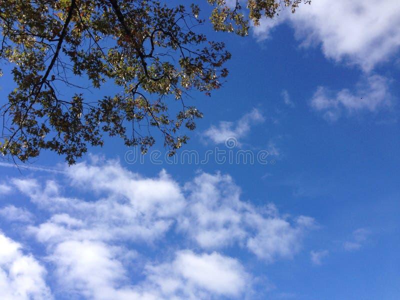 Eichen-Himmel lizenzfreies stockbild