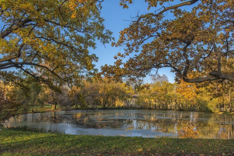 Eichen im Fall durch den Teich stockbilder