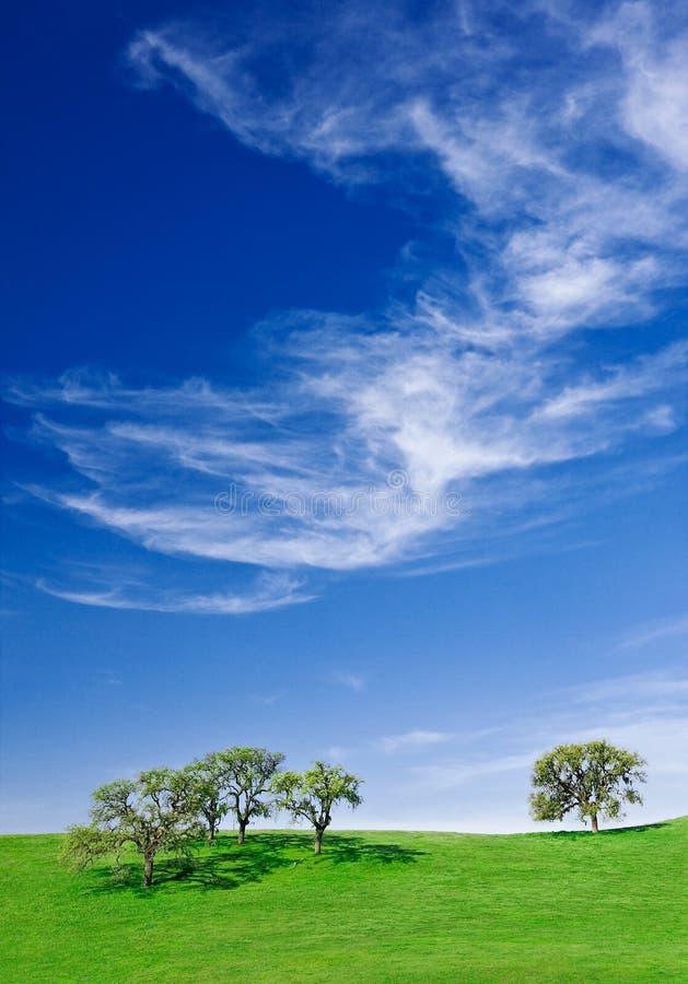 Eichen und Cloudscape stockfoto