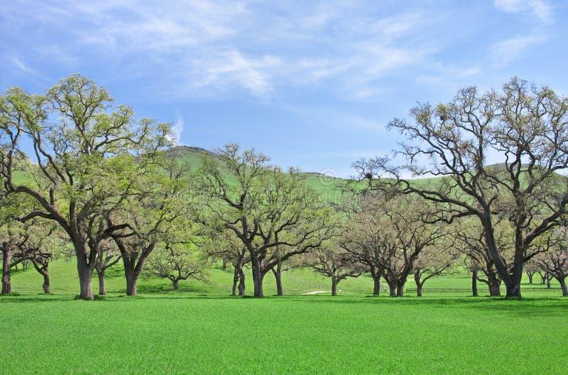 Eichen und Gras stockfotos