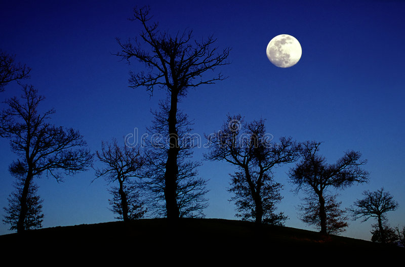 Eichenbäume und Vollmond stockfoto