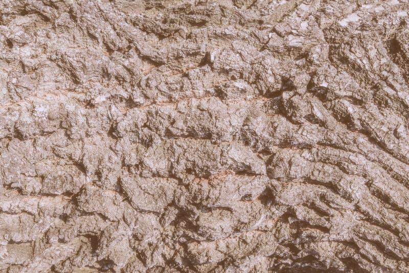 Eichenbarken-Stamm Abschluss herauf Makro alterte natürlichen Beschaffenheitshintergrund der gebrochenen alten hölzernen Weinlese stockbild