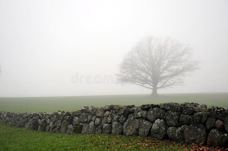 Eichenbaum in Mist Behind Stone Zaun lizenzfreie stockbilder