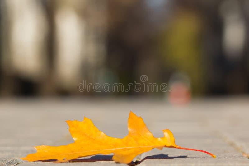 Eichenblatt, das auf der Pflasterung liegt stockbilder