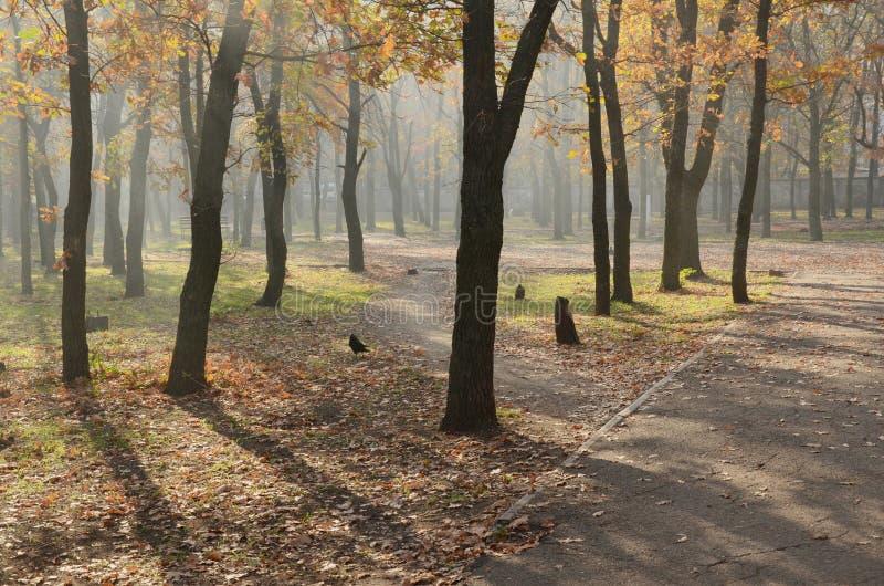 Eichenpark im Herbst stockfotografie