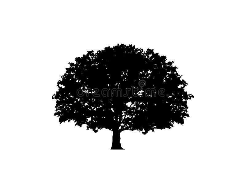 Eichenvektor, Logoillustration Vektorschattenbild eines lokalisierten oder weißen Hintergrundes des Baums vektor abbildung