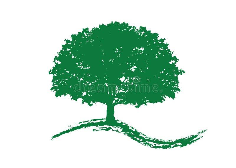 Eichenvektor, Logoillustration Vektorschattenbild eines lokalisierten oder weißen Hintergrundes des Baums lizenzfreie abbildung
