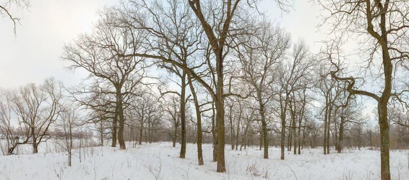 Eichenwaldung im Winter alle im Schnee stockfotografie