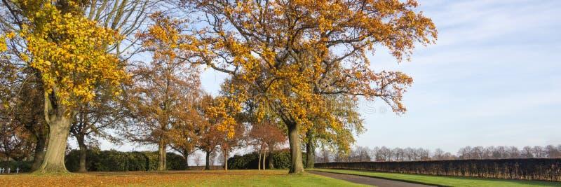 Eichenweg im Herbst lizenzfreies stockbild