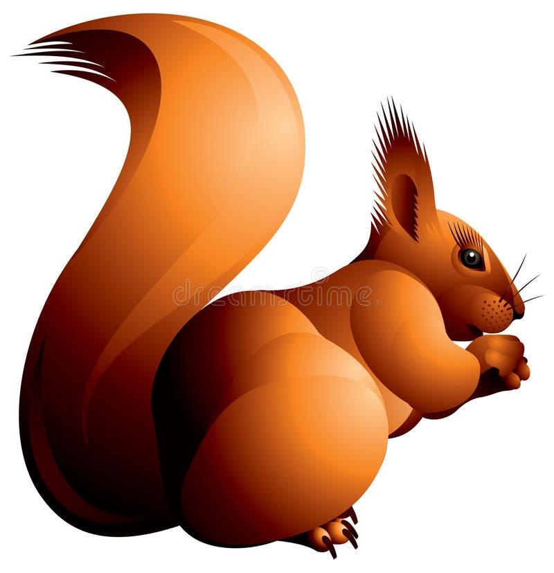 Eichhörnchen lizenzfreie abbildung