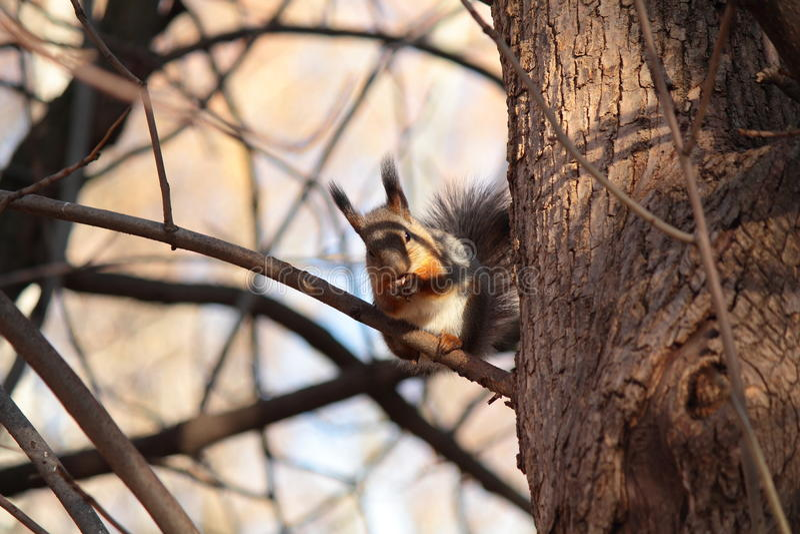 Eichhörnchen am Baum lizenzfreies stockbild