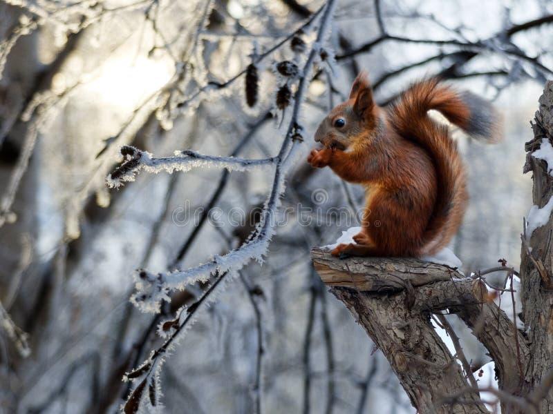 Eichhörnchen, das auf einem defekten Baum sitzt lizenzfreie stockbilder