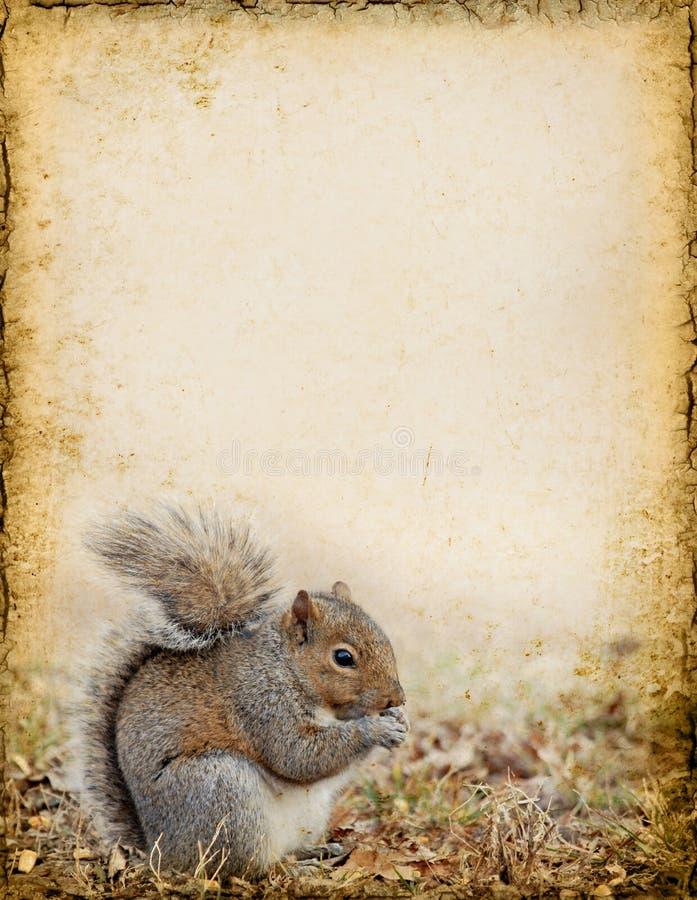 Eichhörnchen-Hintergrund stockfotos