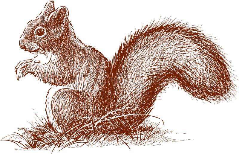 Eichhörnchen mit dem flaumigen Endstück vektor abbildung