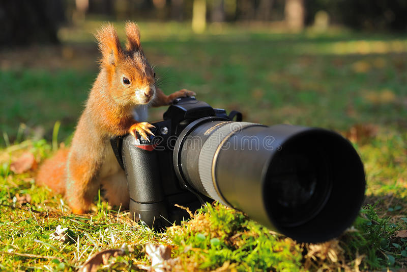 Eichhörnchen mit großer Berufskamera stockfoto