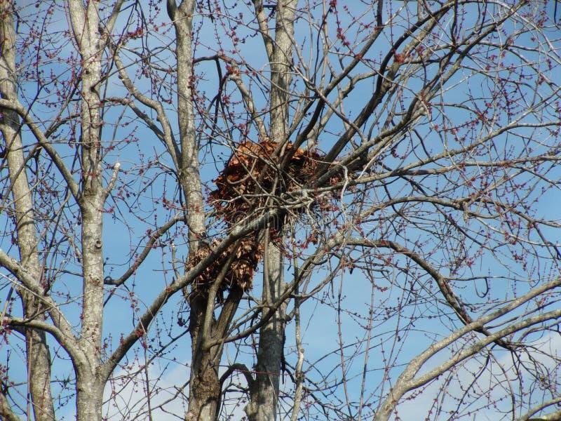 eichh rnchen nest stockfoto bild von eichh rnchen verschachtelung 54363068. Black Bedroom Furniture Sets. Home Design Ideas