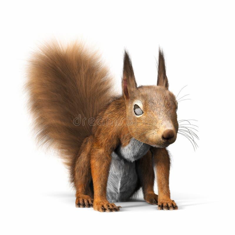 Eichhörnchen- oder Eurasiereichhörnchen, blickend in Richtung der Kamera lizenzfreies stockfoto