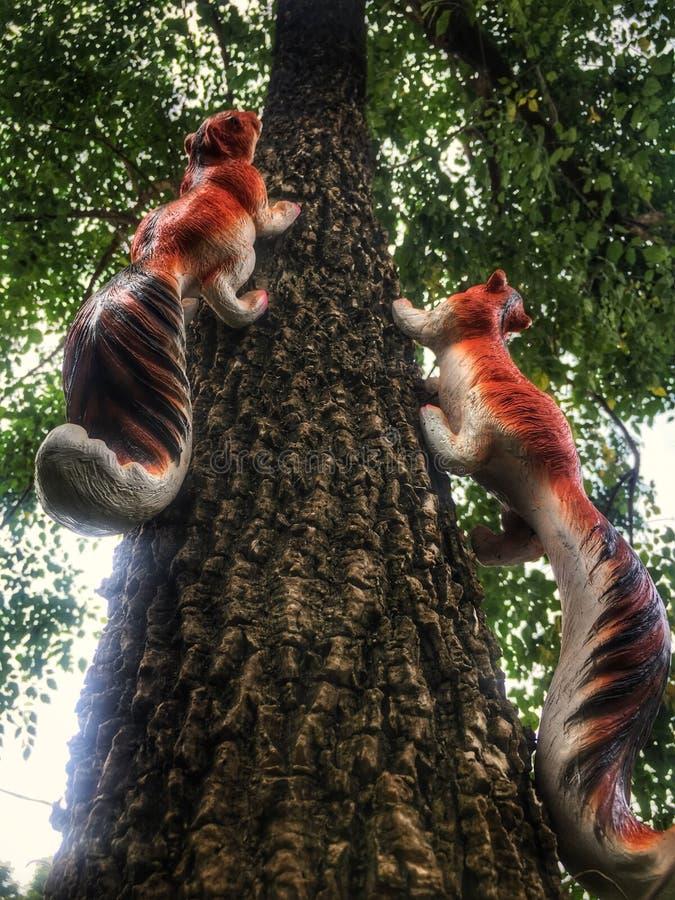 Eichhörnchen-steigender Baum lizenzfreies stockbild