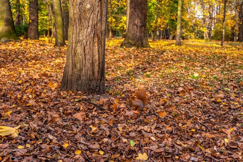 Eichhörnchen unter dem Baum lizenzfreies stockfoto