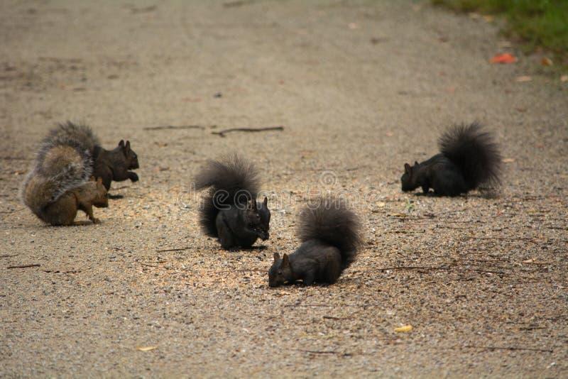 Eichhörnchenfrühstückspartei stockfotos