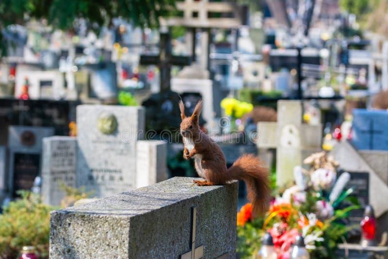 Eichhörnchenstand auf dem Grab stockfotos