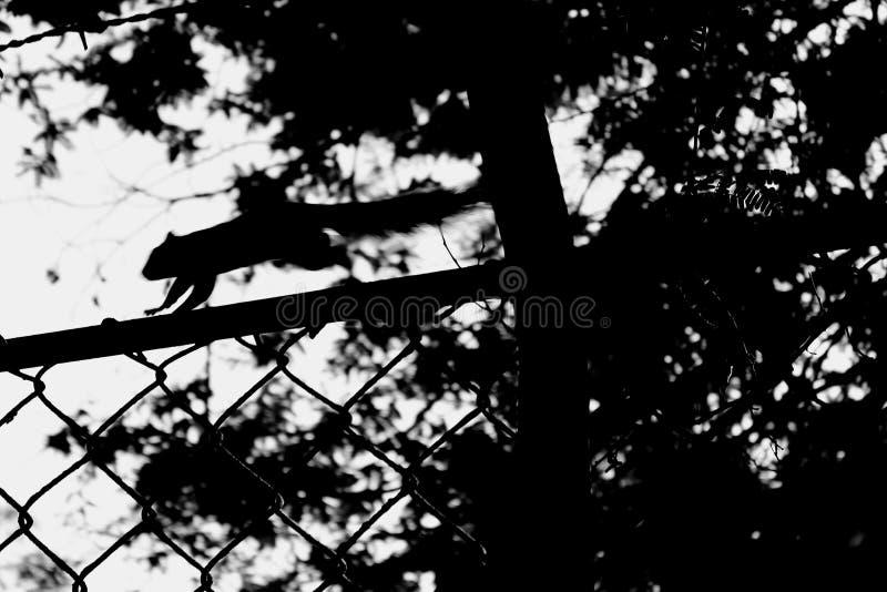 Eichhörnchentonfilme stockfoto