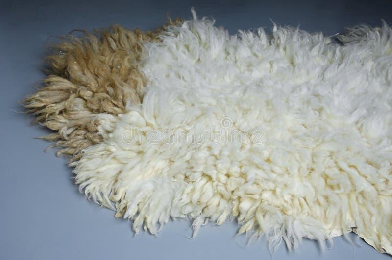 Eid AlAdha绵羊毛皮在灰色背景的 库存照片