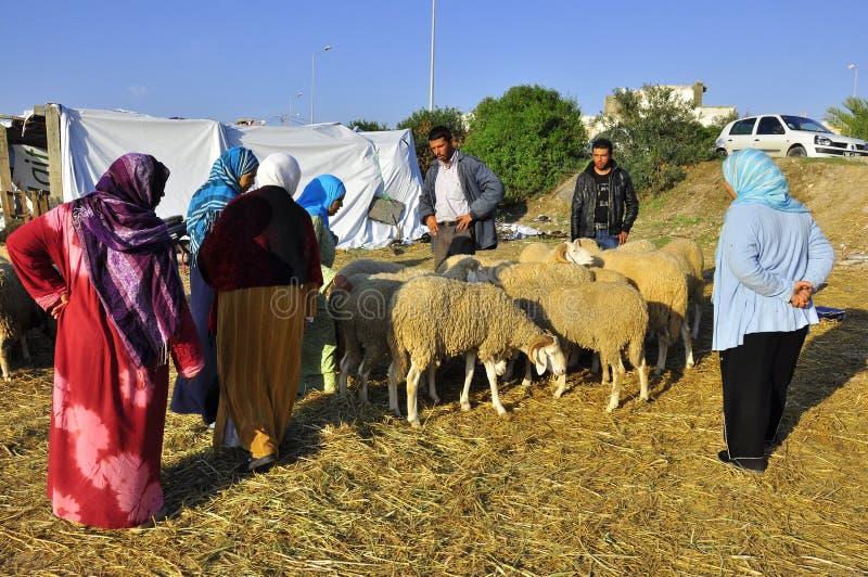 Eid sheep market, selection of the sheep stock image