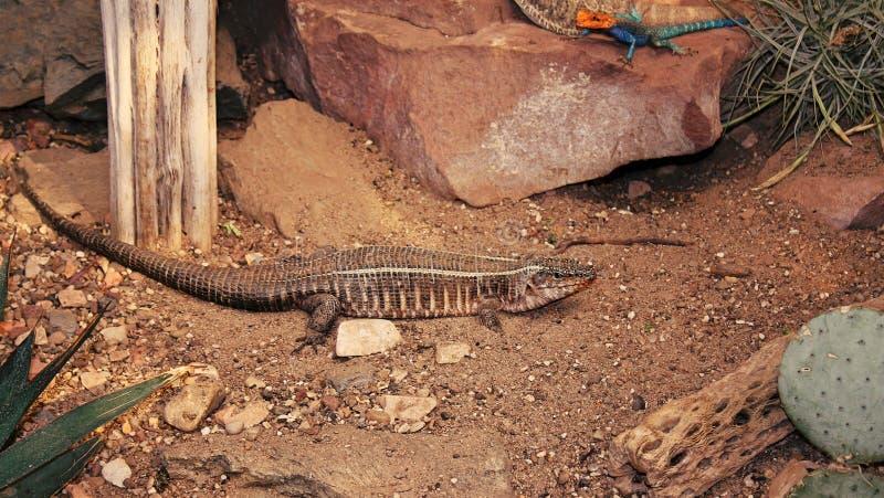 Eidechsen in einem Reptil-Garten stockbilder