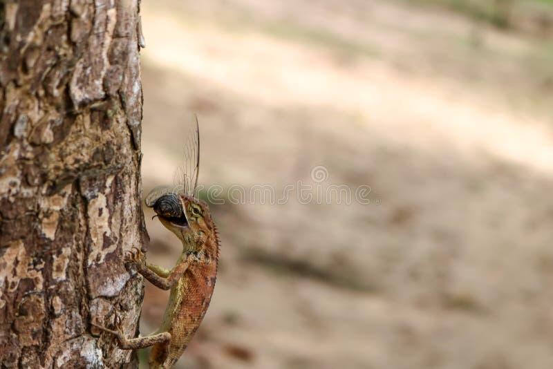 Eidechsen essen Insekten im Garten stockbilder