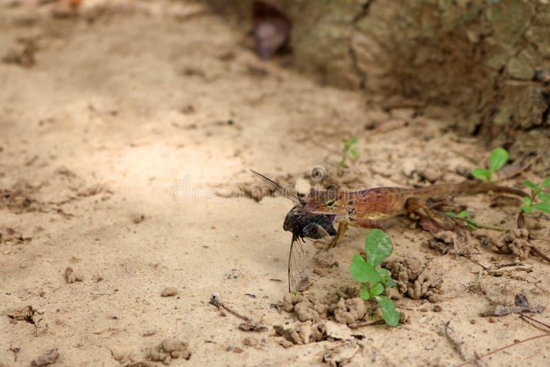 Eidechsen essen Insekten im Garten lizenzfreies stockbild