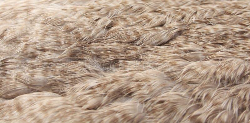 Download Eider Duck Feathers (eiderdown) Stock Photo - Image: 31687948