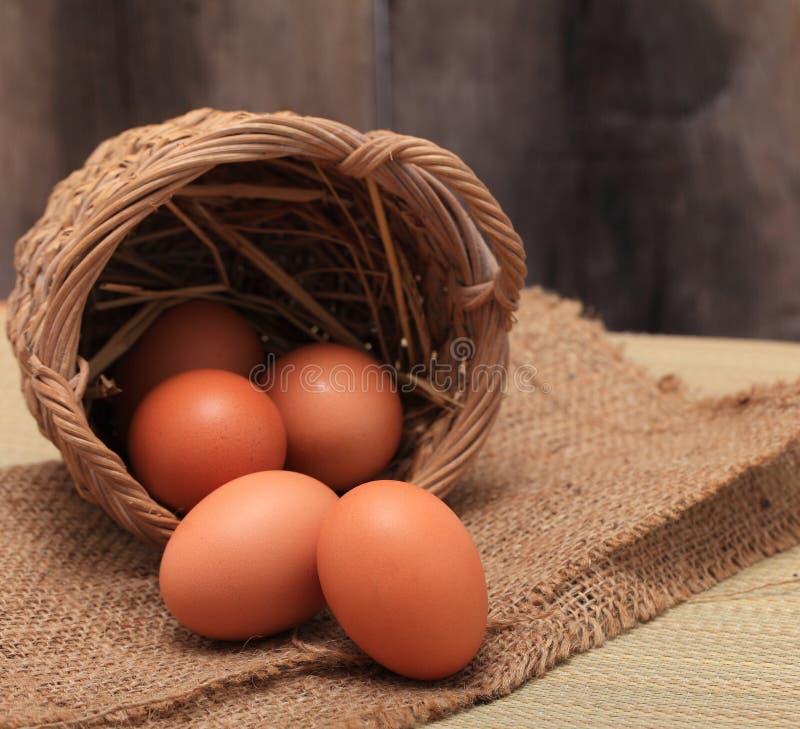 Eier stockbild