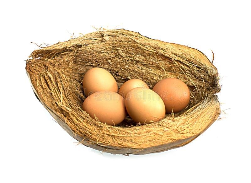 Eier auf Coir lizenzfreie stockfotos