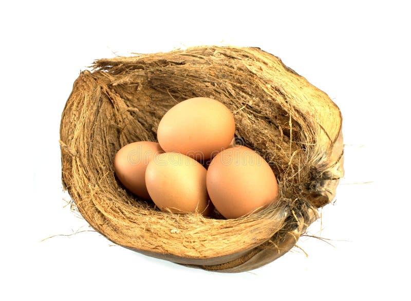 Eier auf Coir lizenzfreie stockbilder