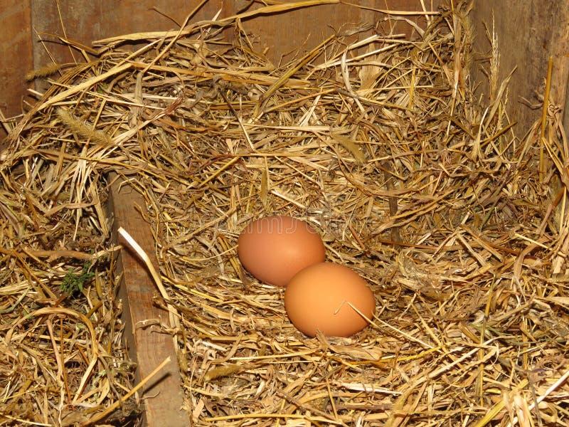 Eier in den natürlichen Strohhennen nisten Bio-Eier Fröhliche Ostern stockbild
