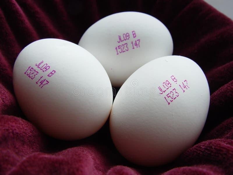 Eier der Zukunft lizenzfreie stockbilder