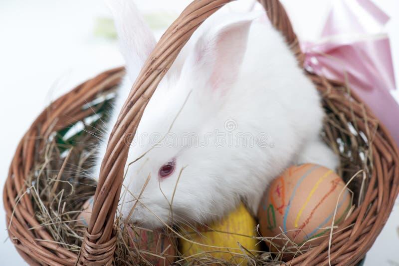 Eier Ostern mit Kaninchen stockbilder