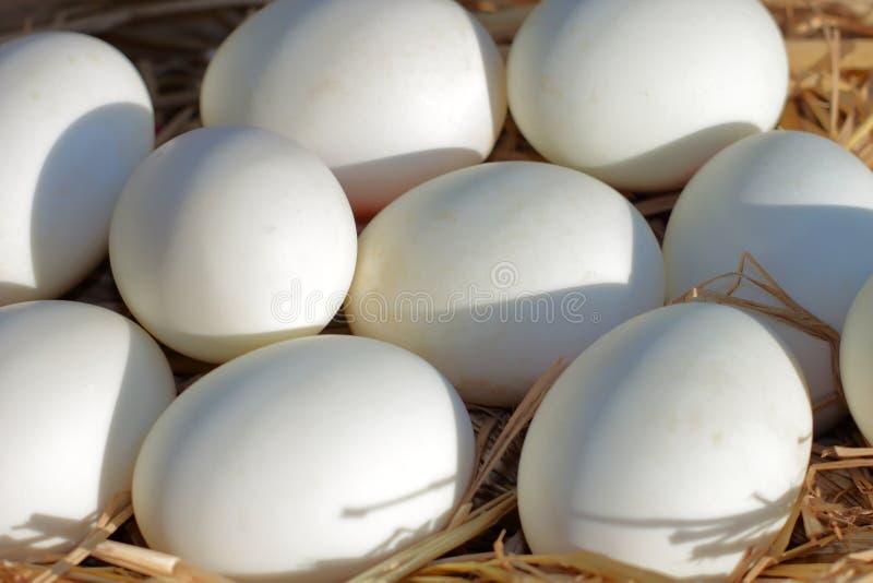 Eier setzen auf das Stroh Picture4 stockbilder
