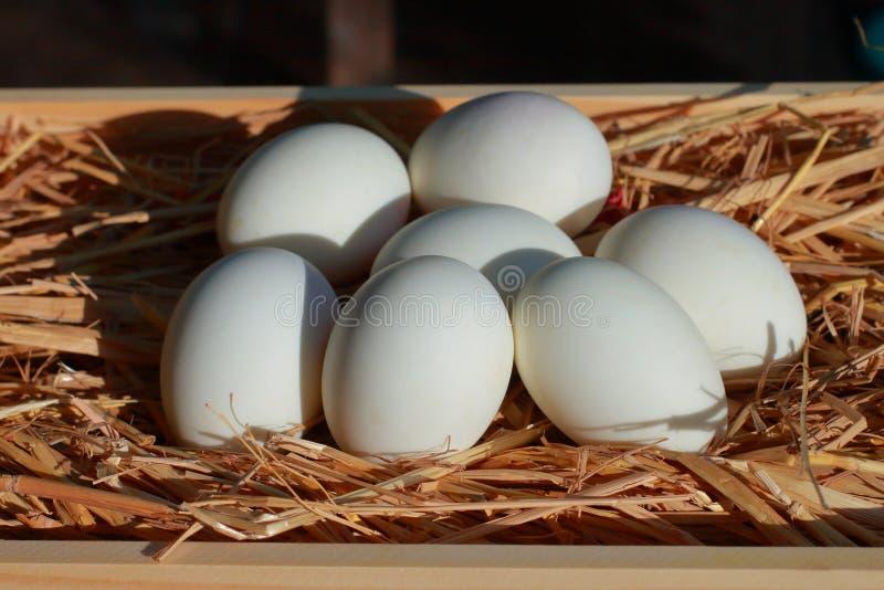 Eier setzen auf das Stroh Picture5 lizenzfreie stockfotos