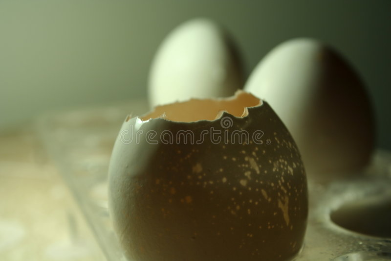 Eier u. pell lizenzfreies stockbild