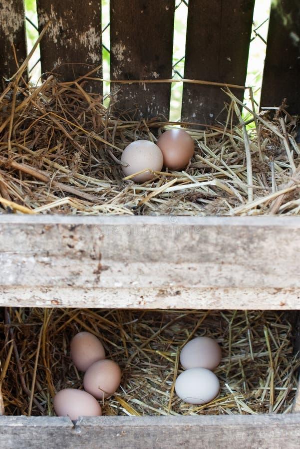 Eier in zwei Reihen des Heuschobernestes stockfotos