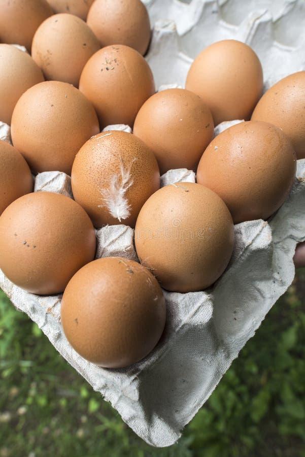Eieren in document verpakking stock afbeelding