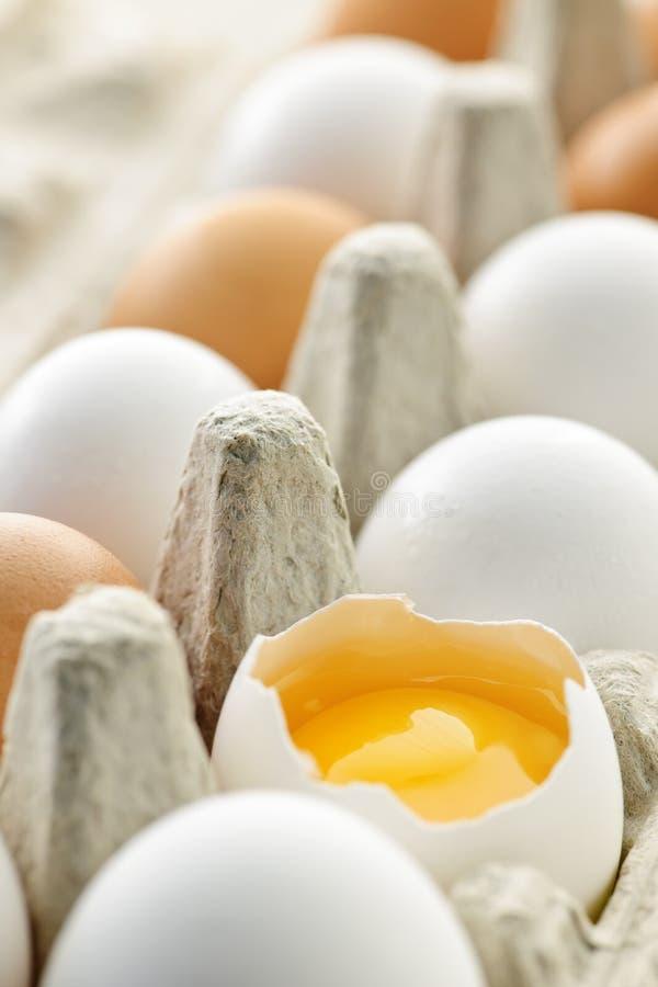 Eieren in doos stock foto