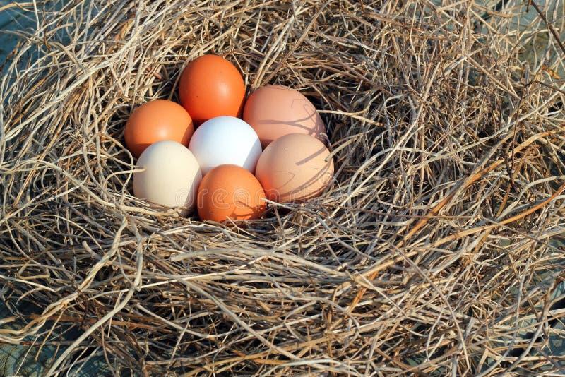 Eieren in een nest stock foto