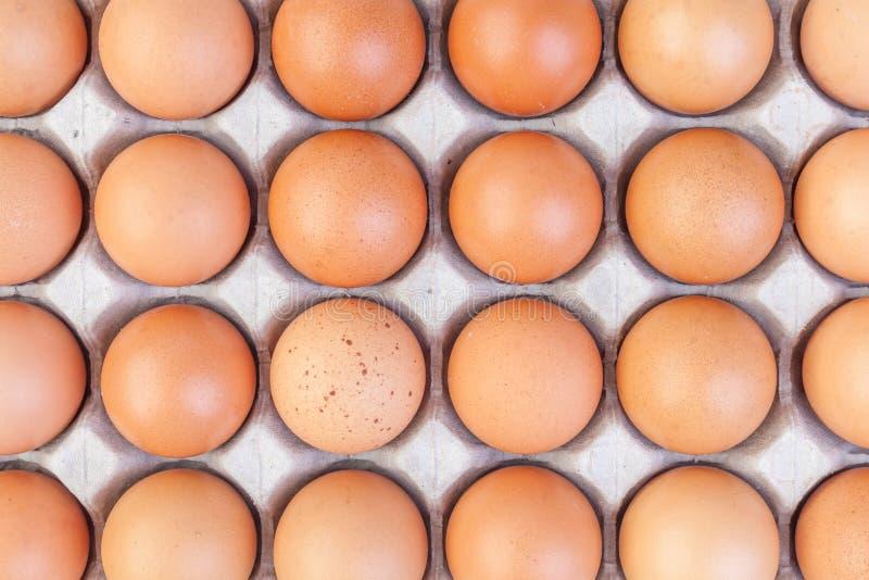Eieren en document eidienblad op witte achtergrond royalty-vrije stock fotografie